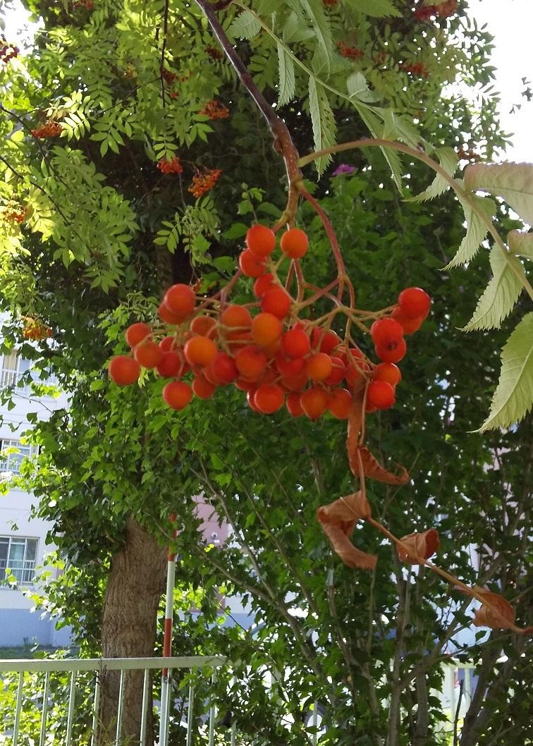 秋の訪れ_b0198109_17402194.jpg