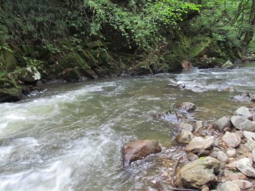 終盤の高原川へ  Ⅱ_e0198329_12071413.jpg
