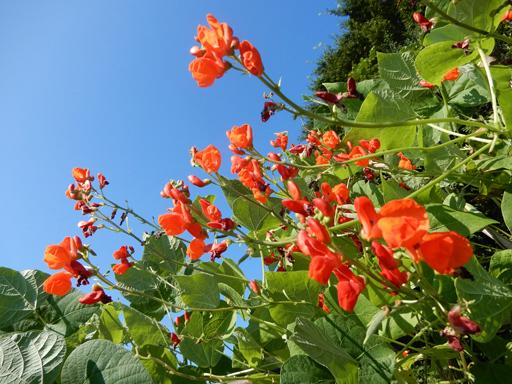 自然農の畑 8月下旬~9月上旬_d0366590_15450399.jpg