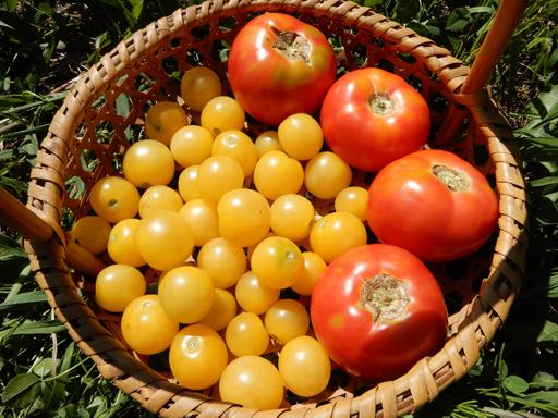 自然農の畑 8月下旬~9月上旬_d0366590_16004552.jpg