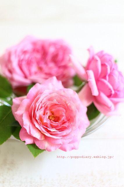 桃のコンポート&桃スイーツ&バラ♡_a0134594_22244662.jpg