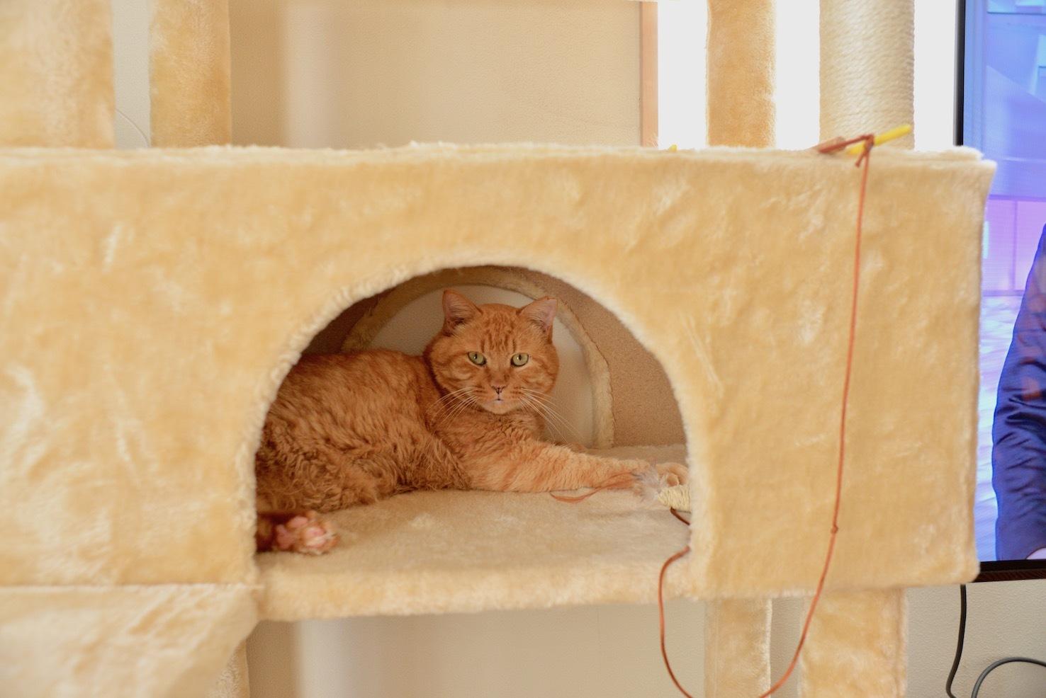 トラ吉(2年前くらいに、家の前に捨てられた)家猫になりました。_d0073743_16140425.jpeg