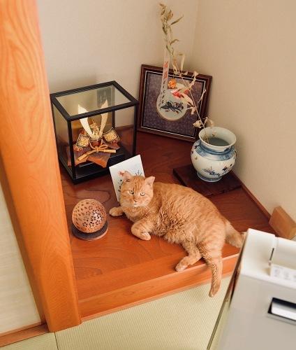 トラ吉(2年前くらいに、家の前に捨てられた)家猫になりました。_d0073743_16141230.jpeg