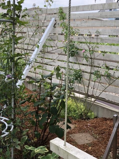 雑草対策にマルチング「ココヤシチップ」_a0243064_10403050.jpg