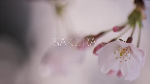 "\""SAKURA\"" by high contrast_c0121374_11194372.jpg"