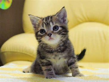 猫_f0162874_10440425.jpg