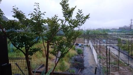 台風9号_a0082776_18140617.jpg