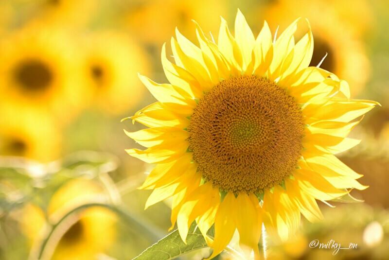 太陽の子_d0177586_16311041.jpg