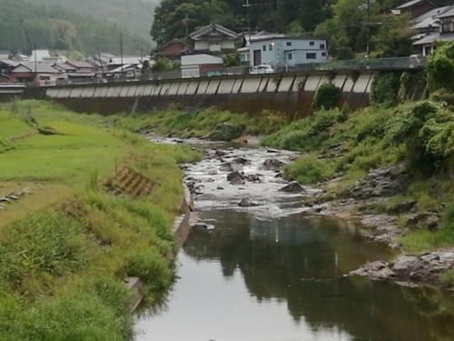 2020/9/2     水位観測  (槻の木橋より)_b0111189_06271011.jpg
