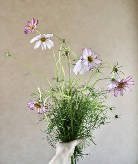 「お家にお花を飾る」9月 コスモスと野葡萄_c0128489_18070442.jpeg
