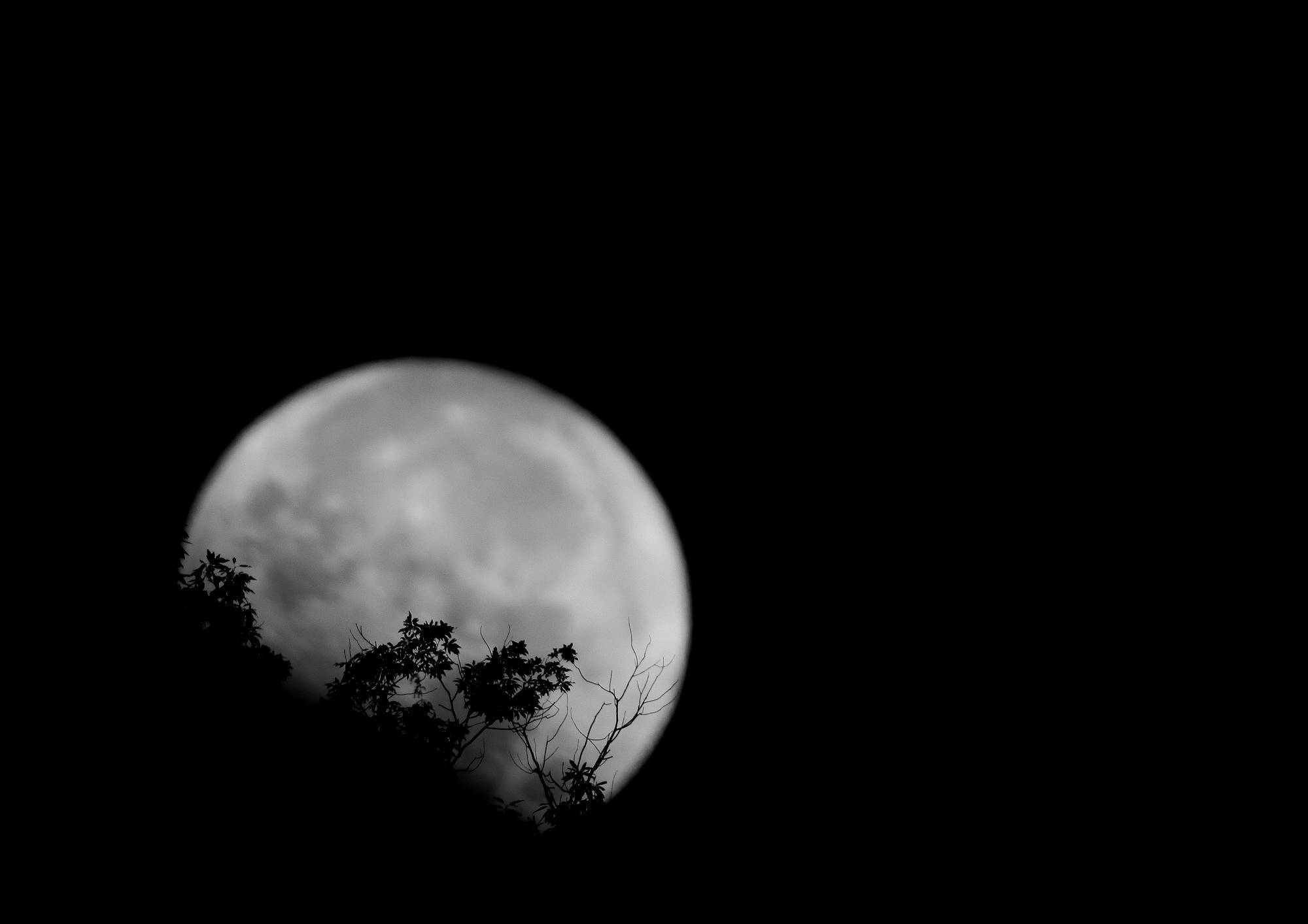 月(Moon) そのⅢ_a0140608_07310967.jpg