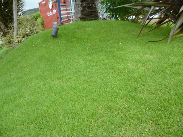 芝貼り工事も太田ガーデンフローにお任せ♬ 今日は芝刈り!!_e0361918_16331984.jpg