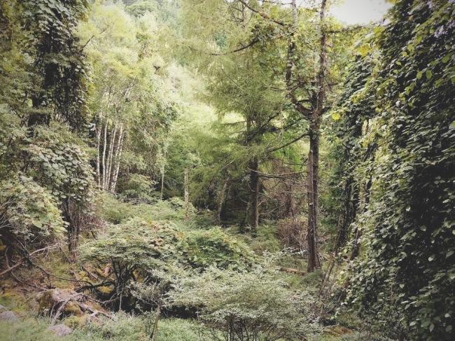 トリカブトの森。_d0180447_09030423.jpg