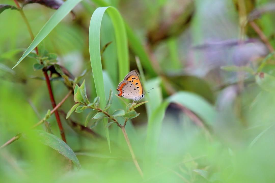 蝶々いろいろ_e0403850_22081749.jpg