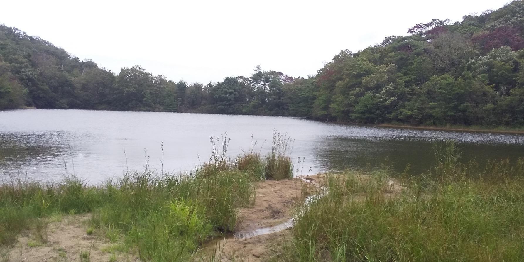 裏丹生山鳴川_b0227552_21132037.jpg