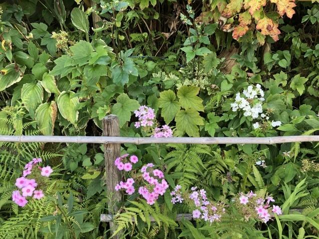 秋の訪れを感じる風景「法面」_a0243064_09412043.jpg