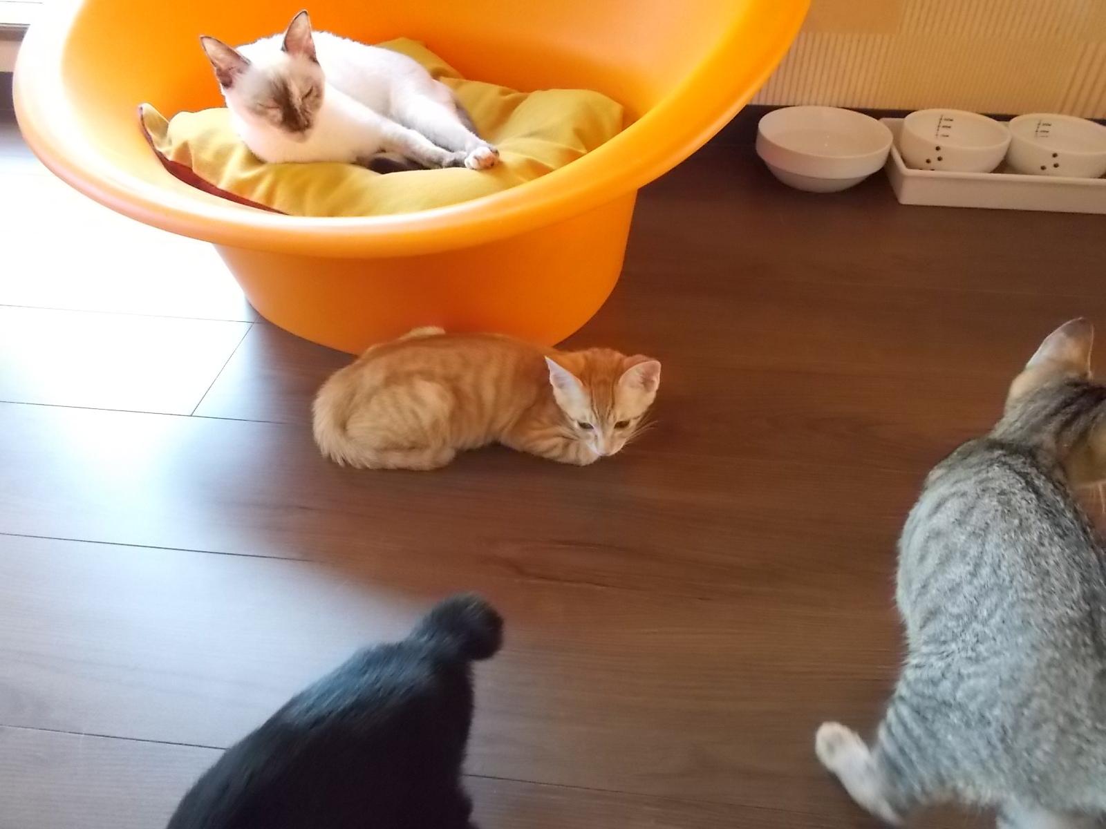 福岡の警固と吉塚に猫カフェ_e0265768_18332291.jpg