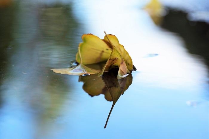 夏から秋へと_e0344574_16142610.jpg