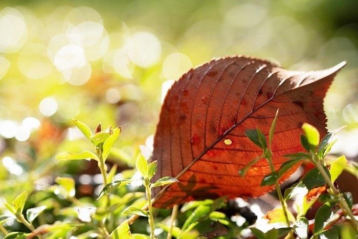 夏から秋へと_e0344574_16144919.jpg