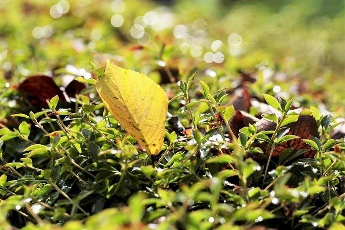 夏から秋へと_e0344574_16145884.jpg