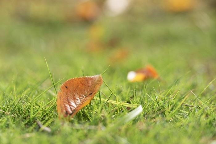 夏から秋へと_e0344574_16150810.jpg