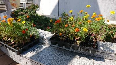 名古屋港水族館前花壇の植栽R2.9.2_d0338682_16483200.jpg