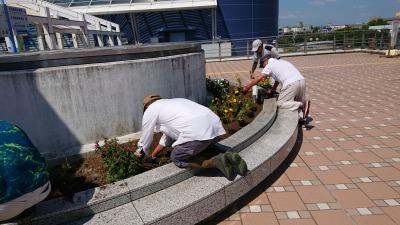 名古屋港水族館前花壇の植栽R2.9.2_d0338682_16485243.jpg