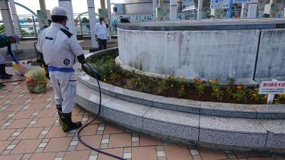 名古屋港水族館前花壇の植栽R2.9.2_d0338682_16490025.jpg