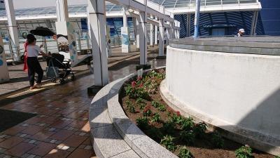 名古屋港水族館前花壇の植栽R2.9.2_d0338682_16491721.jpg