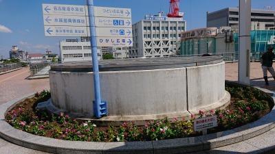 名古屋港水族館前花壇の植栽R2.9.2_d0338682_16492722.jpg