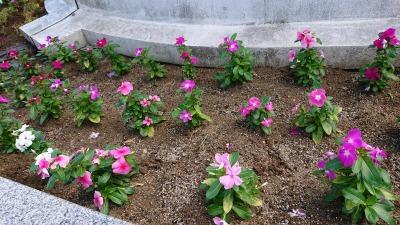 名古屋港水族館前花壇の植栽R2.9.2_d0338682_16494952.jpg