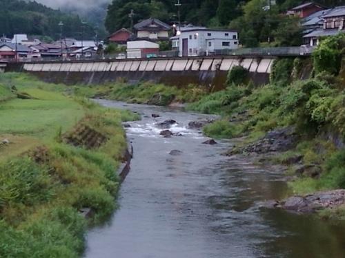 2020/9/3     水位観測  (槻の木橋より)_b0111189_05484595.jpg