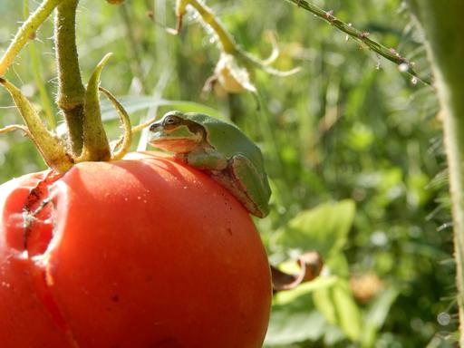自然農の畑 8月下旬~9月上旬_d0366590_10504723.jpg