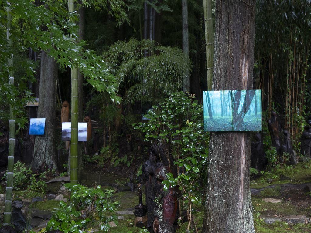「森の中のアート写真展」開催のお知らせ_b0074098_19361248.jpg
