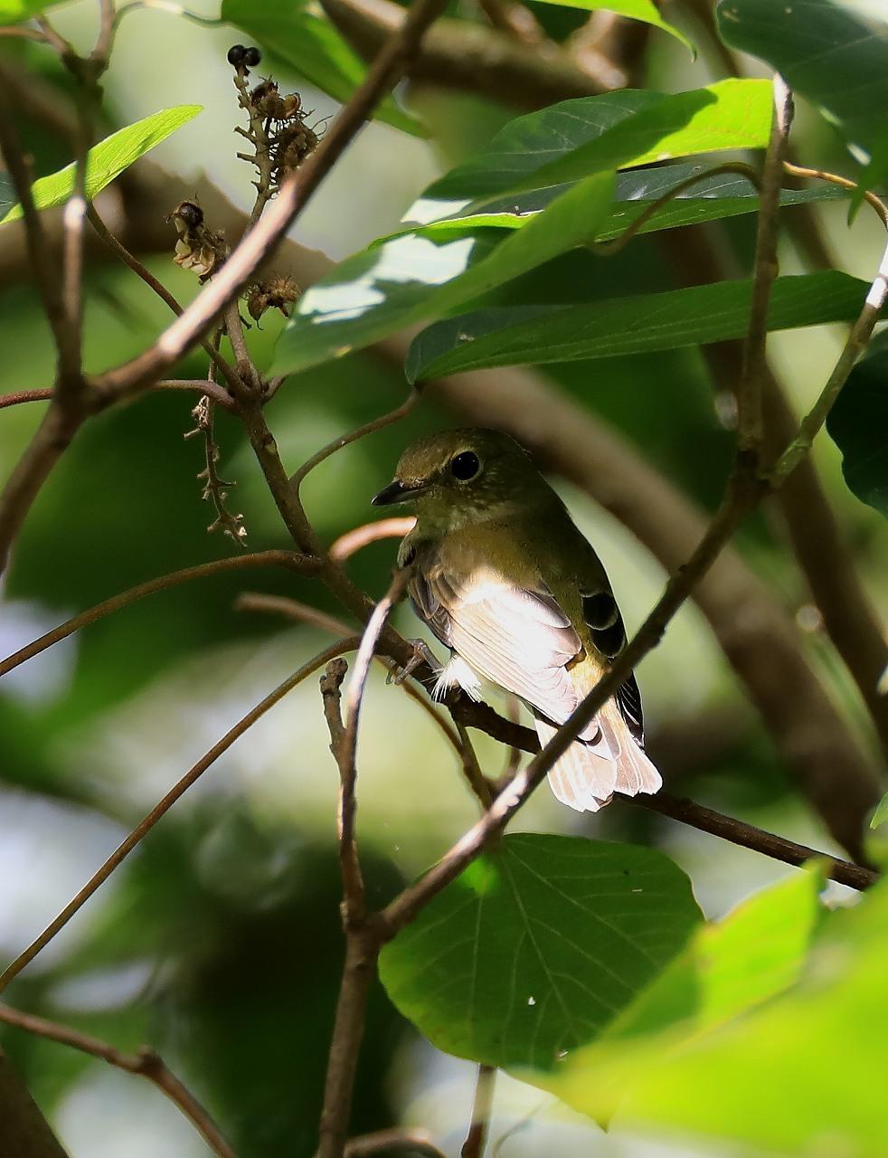 鳥枯れの季節_f0296999_15465406.jpg
