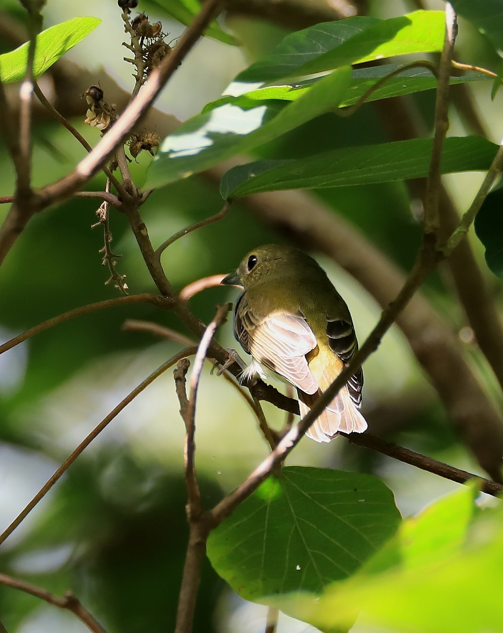 鳥枯れの季節_f0296999_15465952.jpg