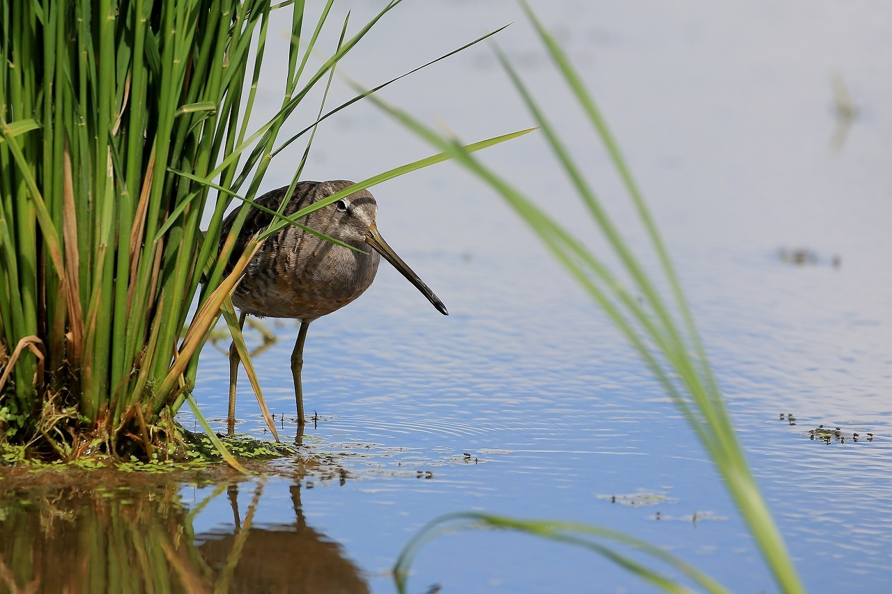 鳥枯れの季節_f0296999_15482070.jpg