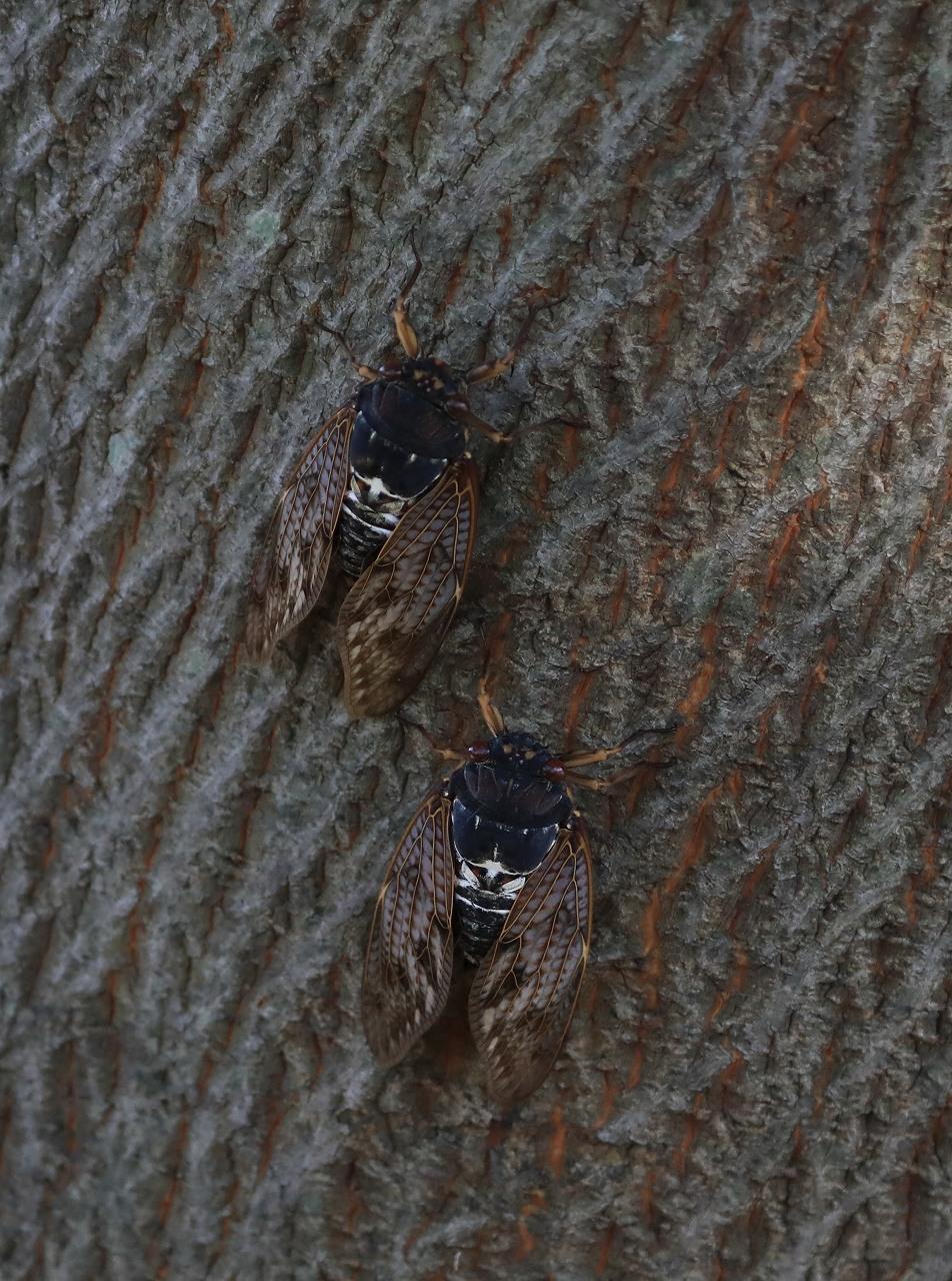 鳥枯れの季節_f0296999_15484571.jpg