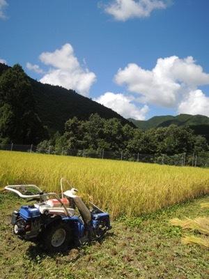 稲刈り2020_a0054948_16101587.jpg