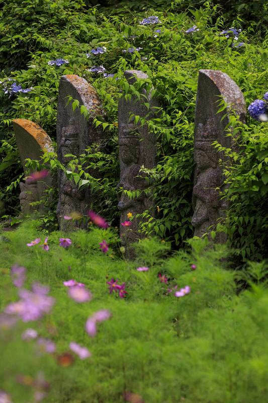 般若寺の夏咲きコスモスと紫陽花_f0155048_21183384.jpg