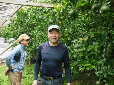 デコポン(肥後ポン) 果実を大きく成長させる匠の水管理と来年のための夏芽の話!後編_a0254656_16475111.jpg