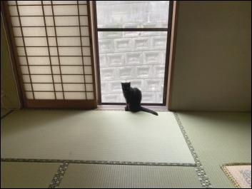 猫の動き_b0300759_12360138.jpeg