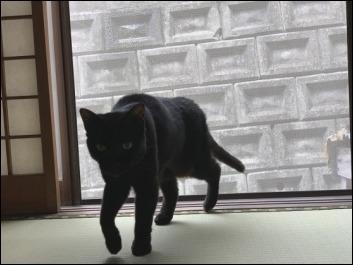 猫の動き_b0300759_12361530.jpeg