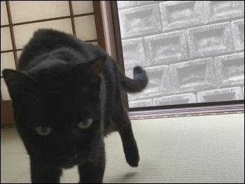 猫の動き_b0300759_12362978.jpeg