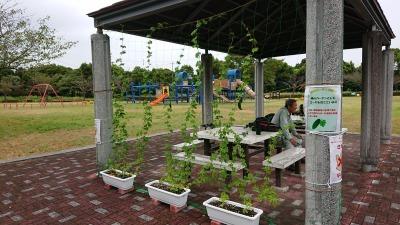 緑のカーテン(ゴーヤ)栽培実験R2.9.2_d0338682_10511514.jpg