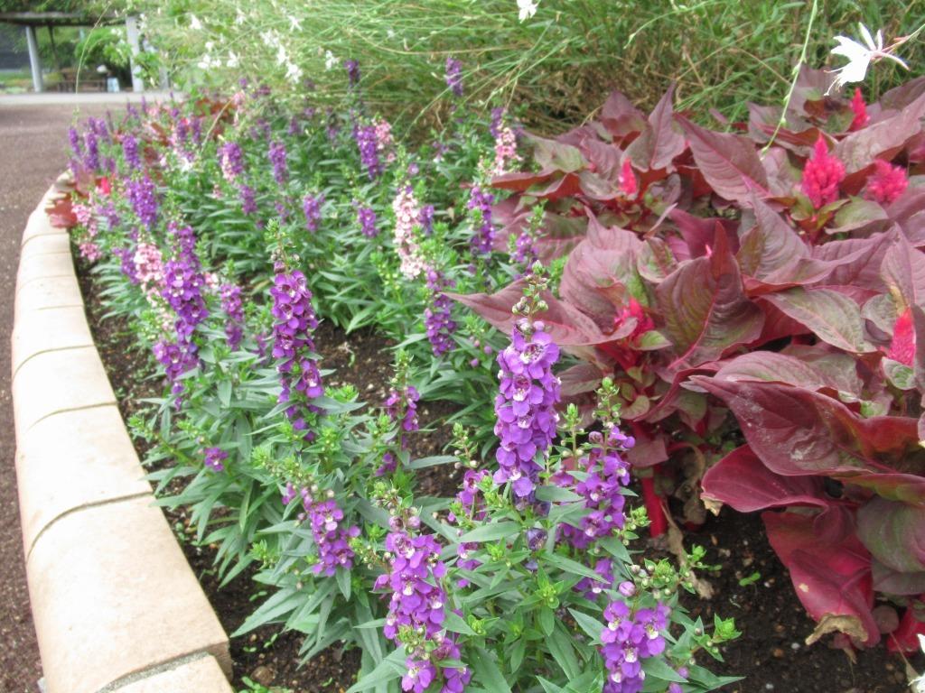 秋花壇になりました!_d0384190_10523267.jpg