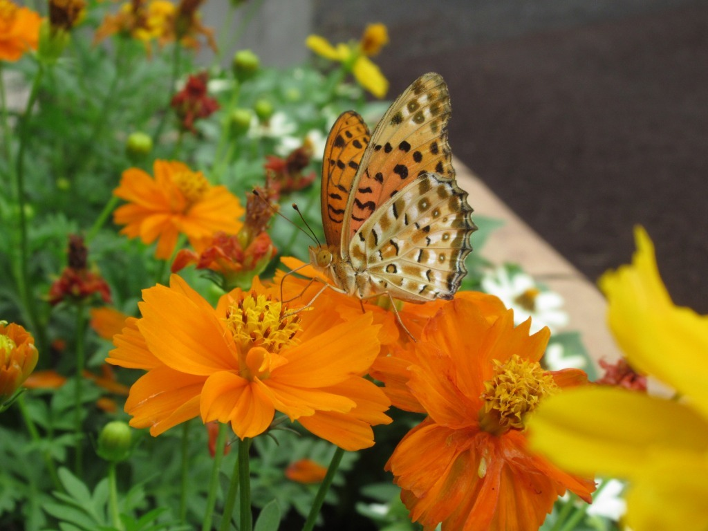 秋花壇になりました!_d0384190_11002142.jpg