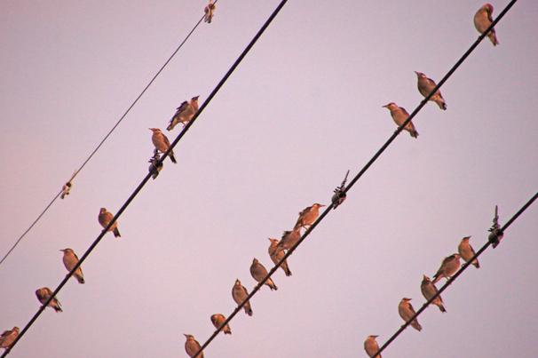 鳥の大群を見て、SDGsを思う_c0139591_01543757.jpg