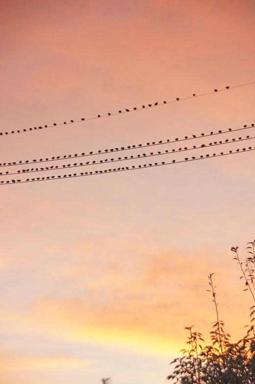鳥の大群を見て、SDGsを思う_c0139591_01543887.jpg