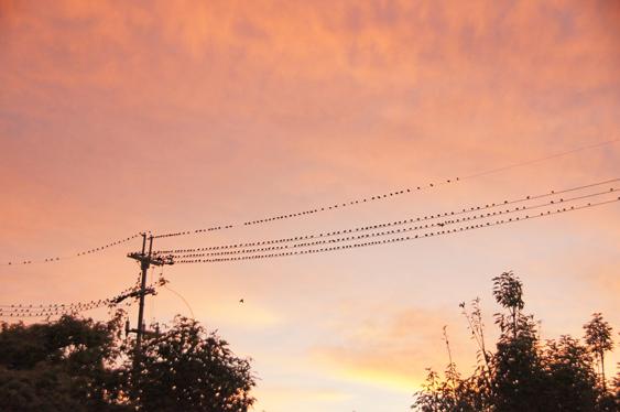 鳥の大群を見て、SDGsを思う_c0139591_01543889.jpg